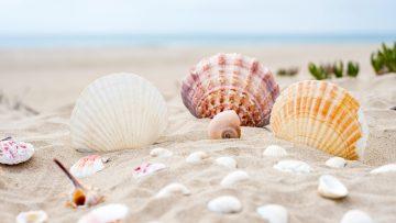 beach-2879929_1920